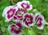 گل ها به فرانسه